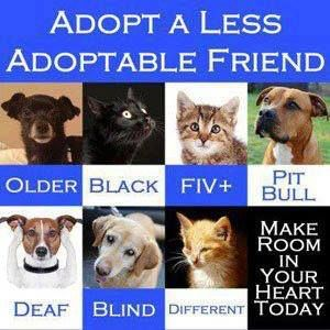 Adopt a Less Adoptable Friend