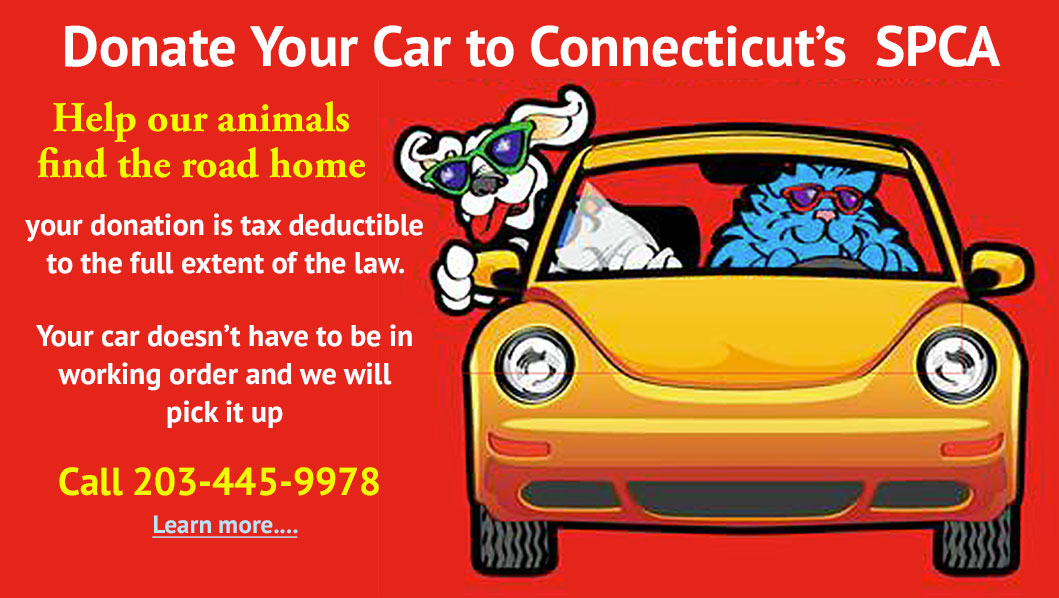 SPCA of CT: Donate Your Car