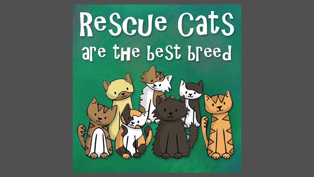Rescue Cats are the Best Breed