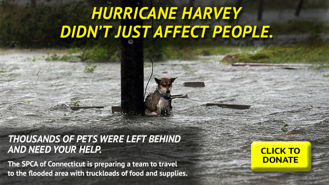 Help us bring relief to the 4-legged victims of Hurricane Harvey.